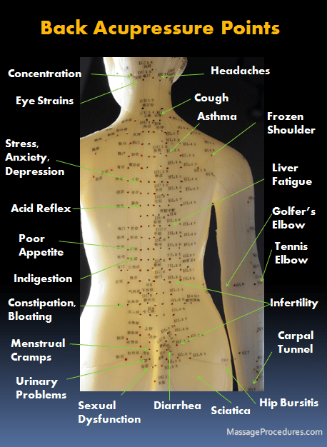 Back acupuncture pressure points showing acupuncture point model